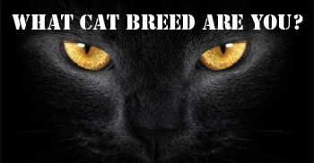 What Cat Breed Are You Quiz?